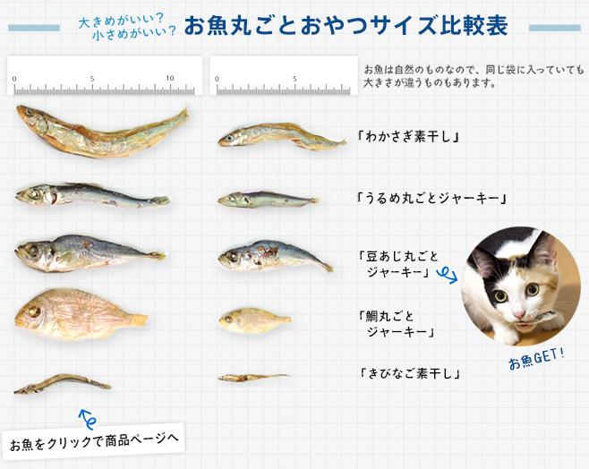 お魚サイズ画像