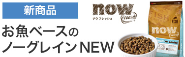 nowフィッシュ新発売